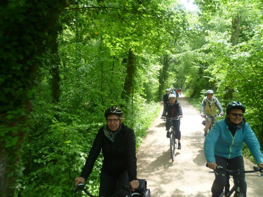 Cycling through a green tunnel of leaves in Bamberg's Hain park, a shady spot on the river Regnitz cycle route.